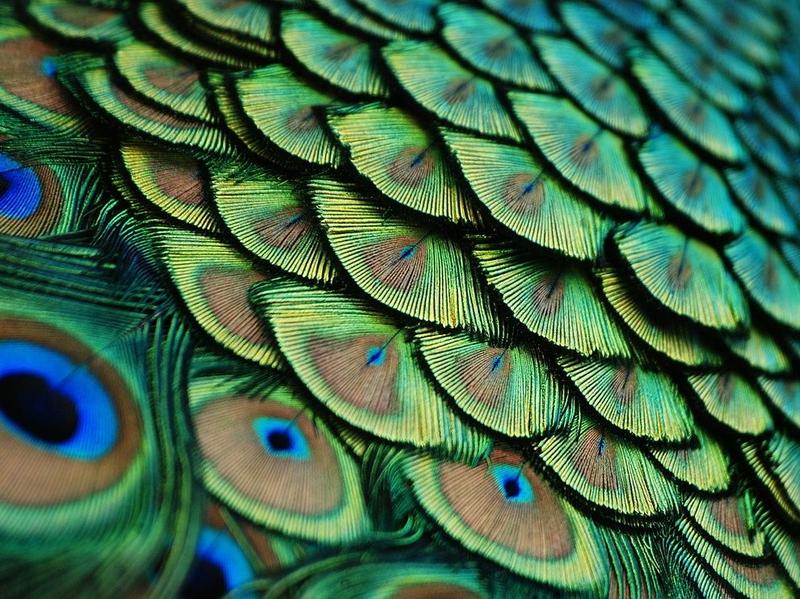 http://s3.hostingkartinok.com/uploads/images/2012/12/c13ac5b2467ffdc458a037bbb521fc0a.jpg