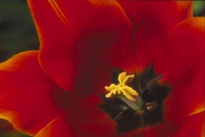 Якія кветкі ў вашым садзе?