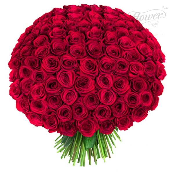 http://s3.hostingkartinok.com/uploads/images/2013/10/c0ddf34f57011342bf78939e6367921e.jpg