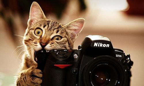 Хочу стать фотографом! С чего начать