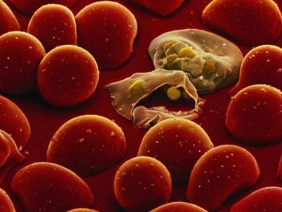 Нейроэндокринная регуляция иммунного ответа