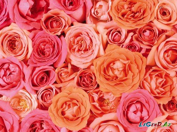 IMG Лаура, Ларис, - С днём рождения, хорошая! фото цветов.