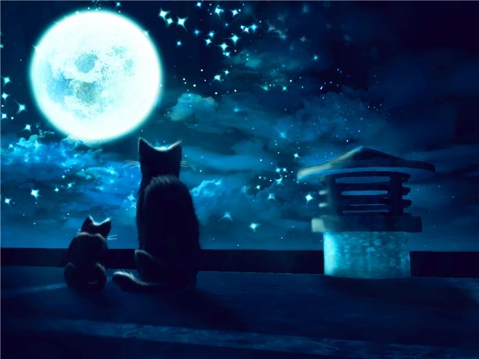 Caging cats at night
